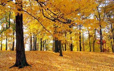 عکس درخت های پاییزی