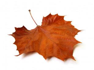 عکس برگ زرد پاییزی