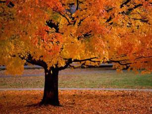 عکس درخت پاییزی