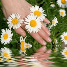 عکس گل مروارید و دست