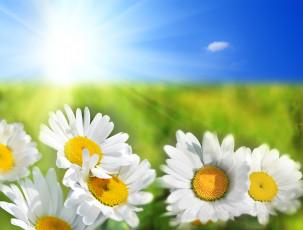 عگس گل مروارید و آفتاب