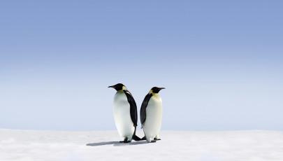 عکس دو پنگوئن