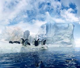 عکس دسته پنگوئن ها در آبهای قطب