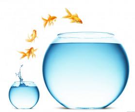 عکس تنگ ماهی کوچک و بزرگ