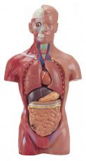 عکس آناتومی بدن مرد