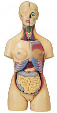 عکس آناتومی بدن زن