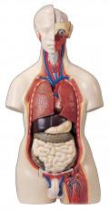 عکس آناتومی اعضای بدن مرد