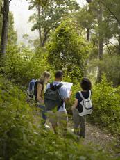 عکس گروه دوستان در جنگل