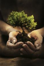 عکس دست و رشد گیاه