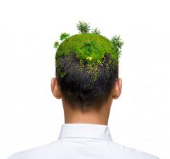 عکس سبز شدن چمن روی سر