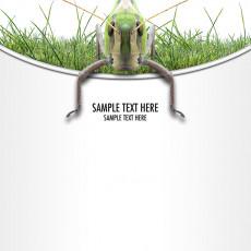 عکس حشره و سبزه