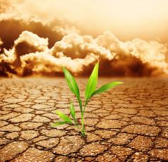 عکس گیاه و کویر خشک