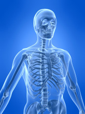 عکس اسکلت بدن انسان
