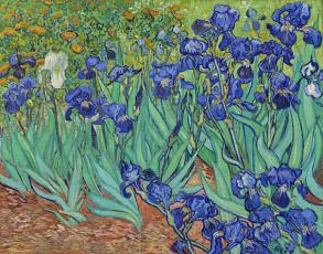 تابلوی نقاشی گلهای زنبق اثر ونسان ونگوگ