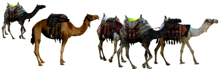 عکس شتران کاروان امام حسین در کربلا
