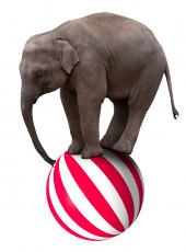 عکس فیل و توپ در سیرک