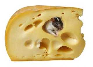 عکس پنیر و موش